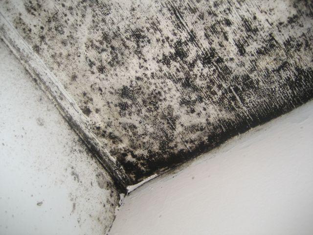 大量の黒カビが発生